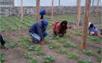 caratula website Peru 2010